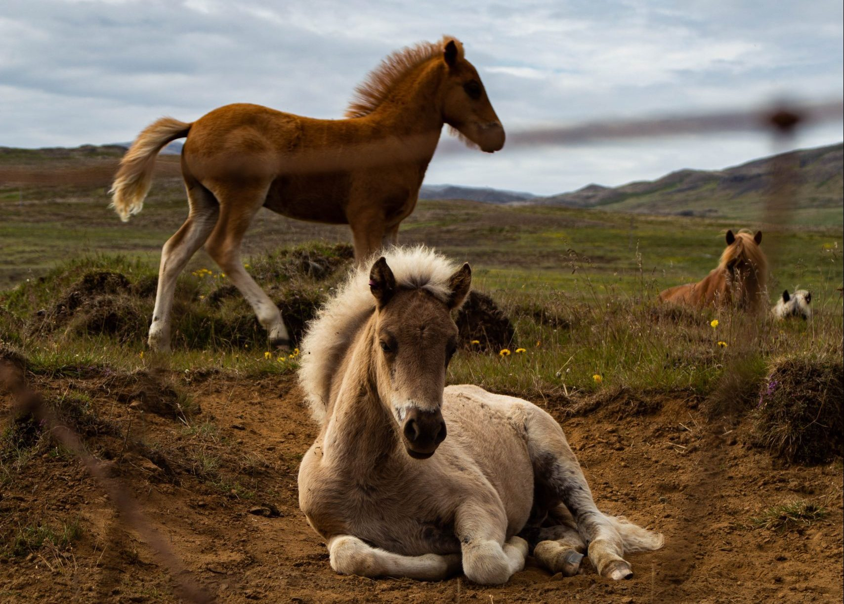 White and brown horses close up photography